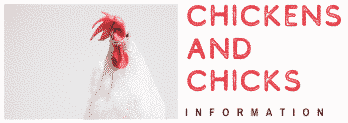 Chicken and Chicks Info Logo