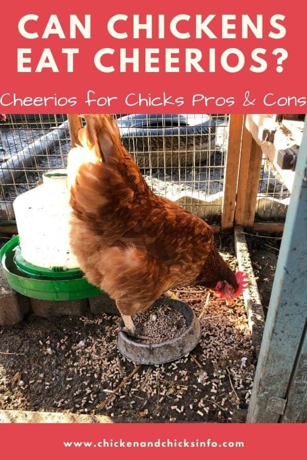 Can Chickens Eat Cheerios