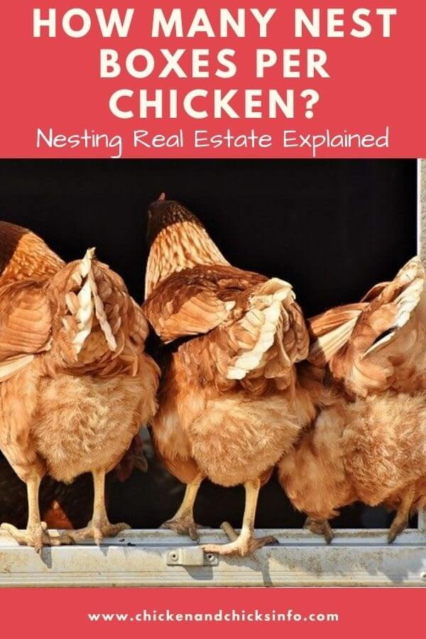 How Many Nest Boxes per Chicken