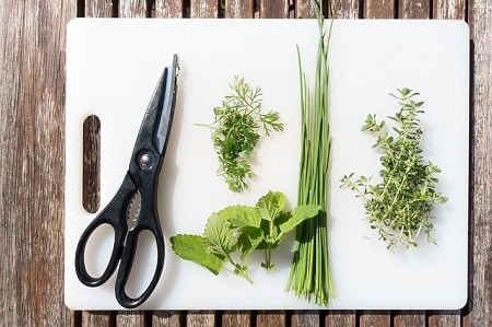 Other Herbs That Are Good for Chickens