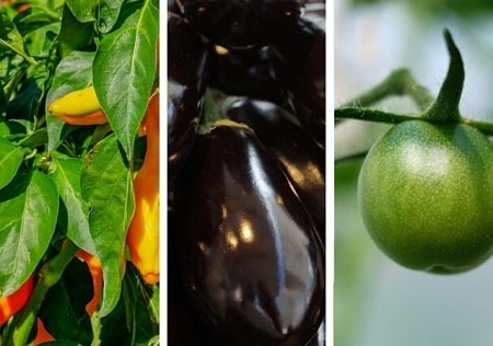 Be Wary of Vegetables That Are Part of the Nightshade Family
