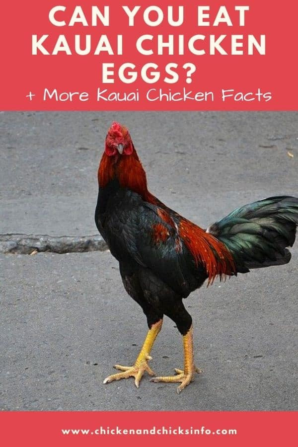 Can You Eat Kauai Chicken Eggs