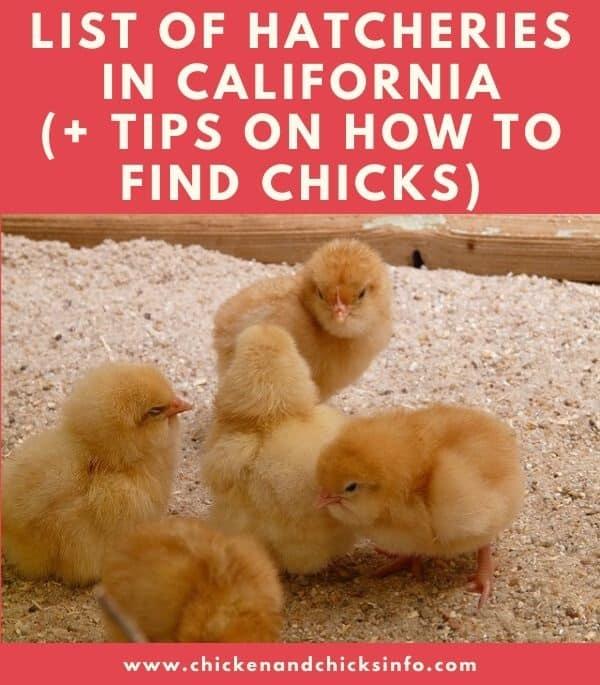 Chicken Hatchery California