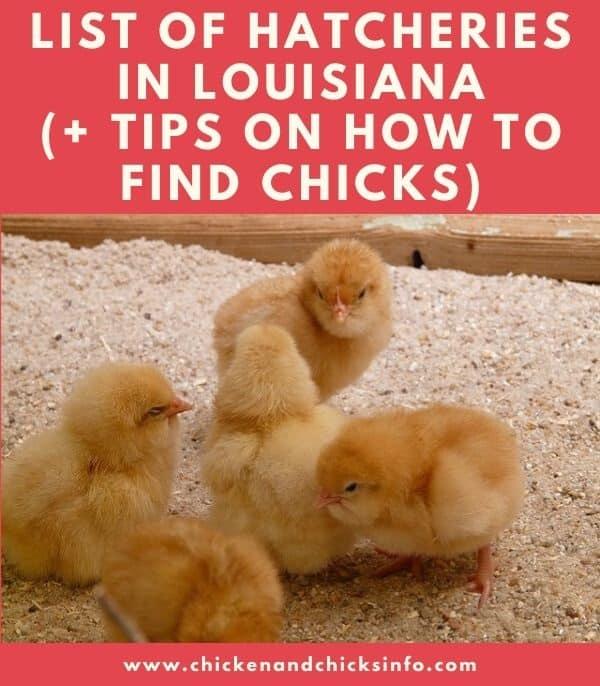 Chicken Hatchery Louisiana