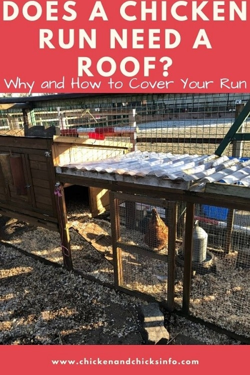 Does a Chicken Run Need a Roof