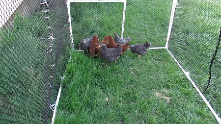 Reasons Why You Should Cover Your Chicken Run