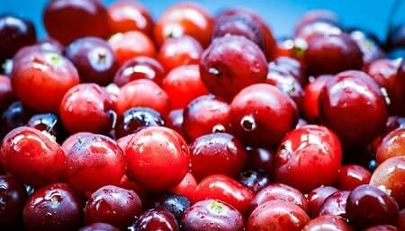 Are Cranberries Healthy for Chickens