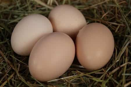 Black Star Chicken Egg Color Size and Production