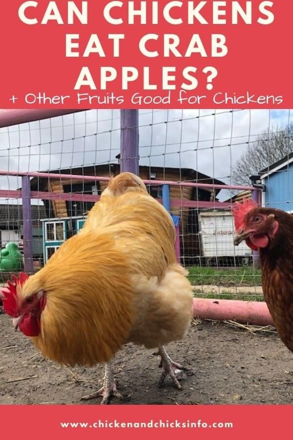 Can Chickens Eat Crab Apples