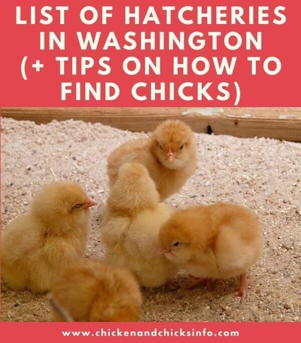Chicken Hatchery Washington