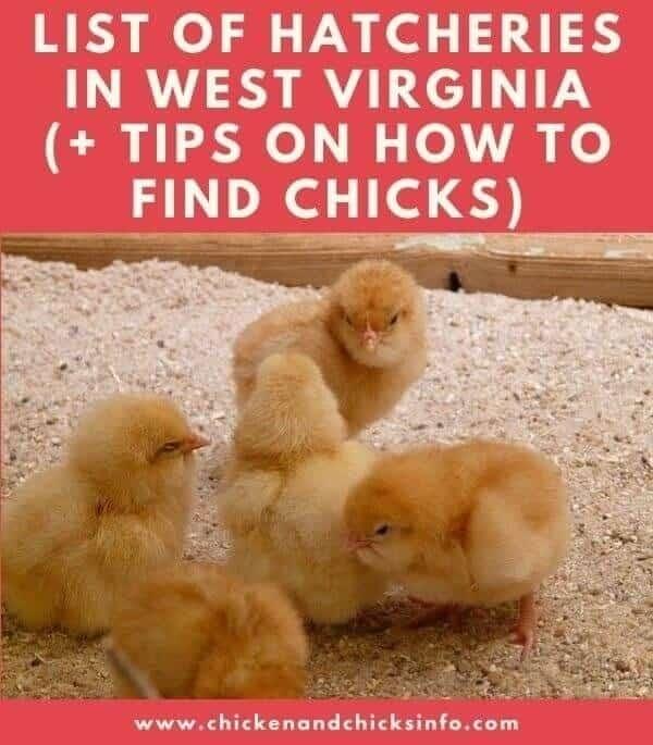 Chicken Hatchery West Virginia