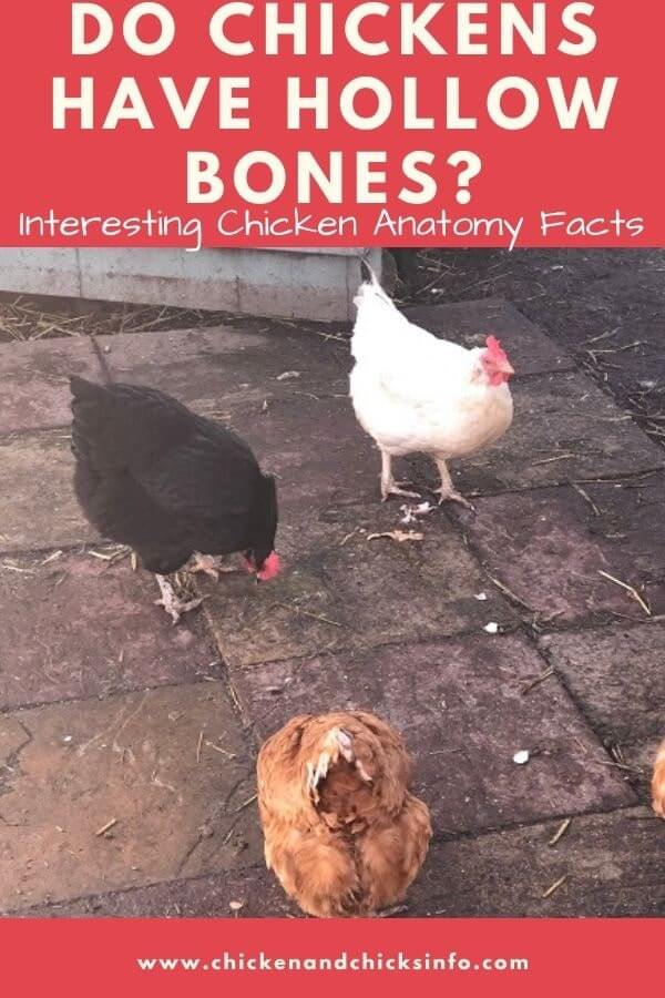 Do Chickens Have Hollow Bones