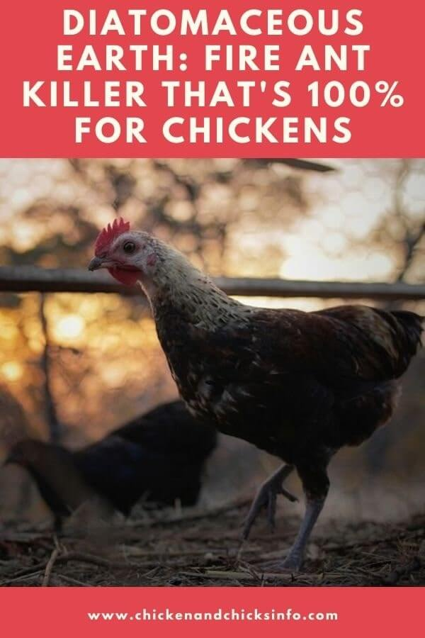 Fire ant killer safe for chickens