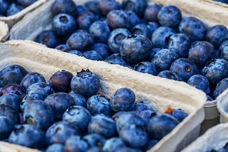 How to Feed Blueberries to Your Chickens