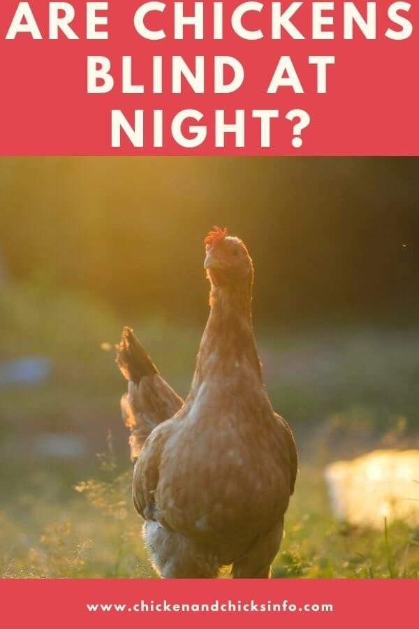Are Chickens Blind at Night