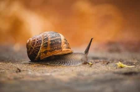 Are There Any Risks to Chickens Eating Snails