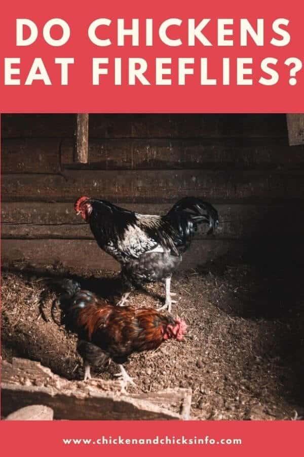 Do Chickens Eat Fireflies