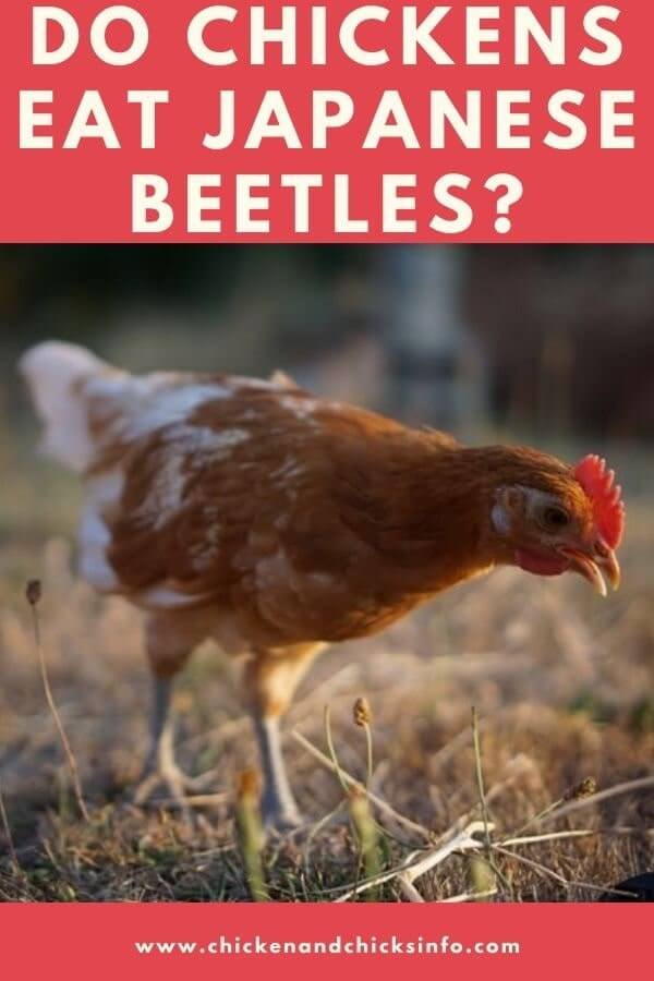 Do Chickens Eat Japanese Beetles