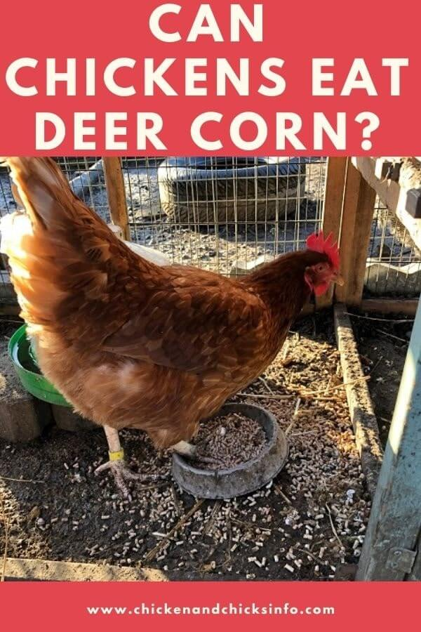 Can Chickens Eat Deer Corn