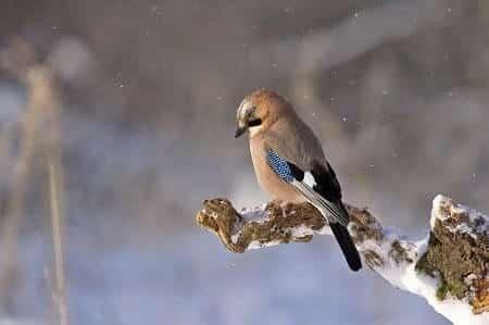 Are Birds Mammals or Reptiles