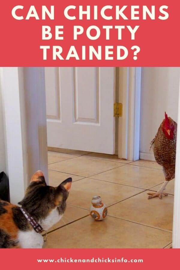 Can Chickens Be Potty Trained