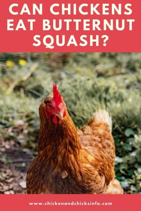 Can Chickens Eat Butternut Squash