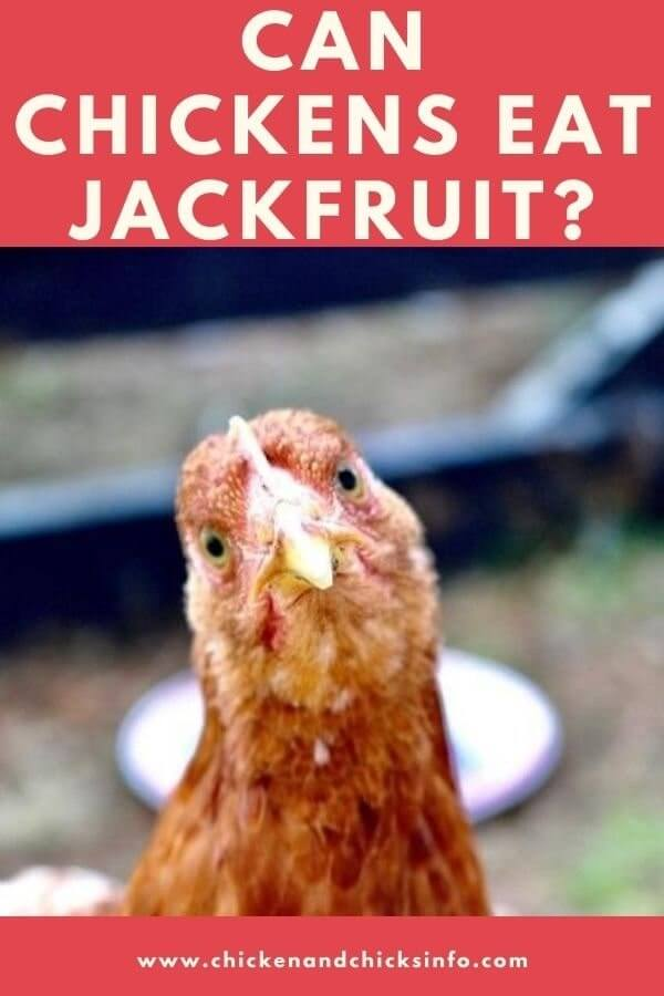 Can Chickens Eat Jackfruit