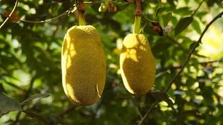 Health Benefits of Jackfruit for Chickens