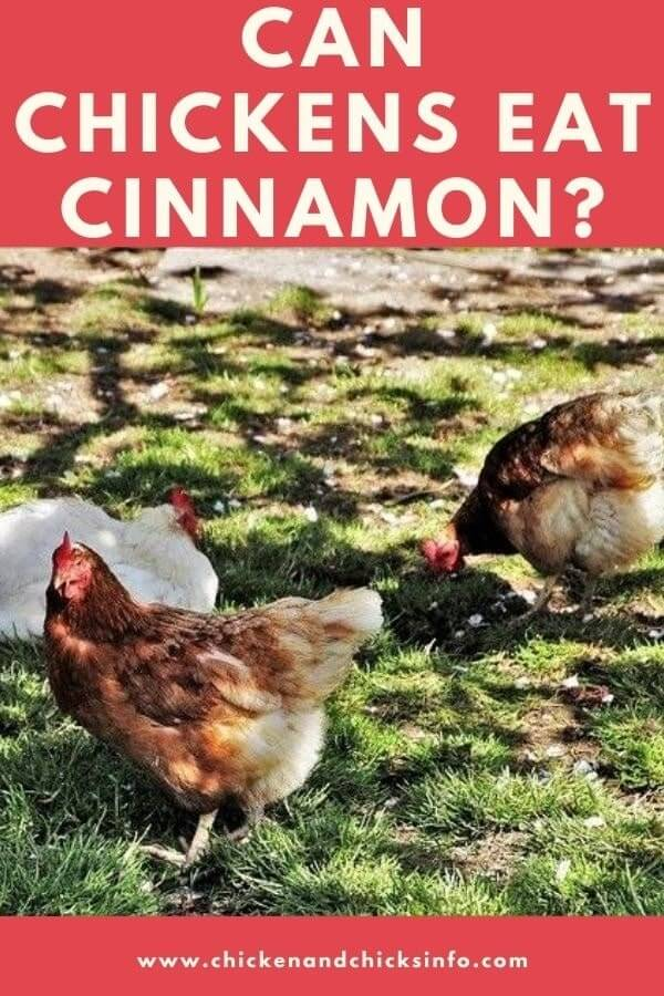 Can Chickens Eat Cinnamon