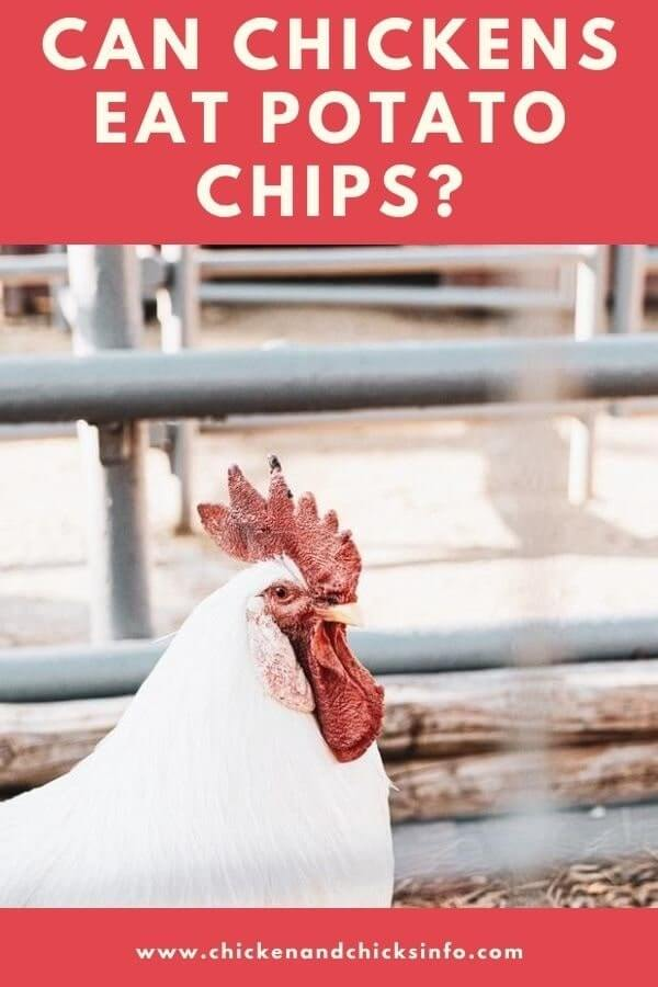Can Chickens Eat Potato Chips