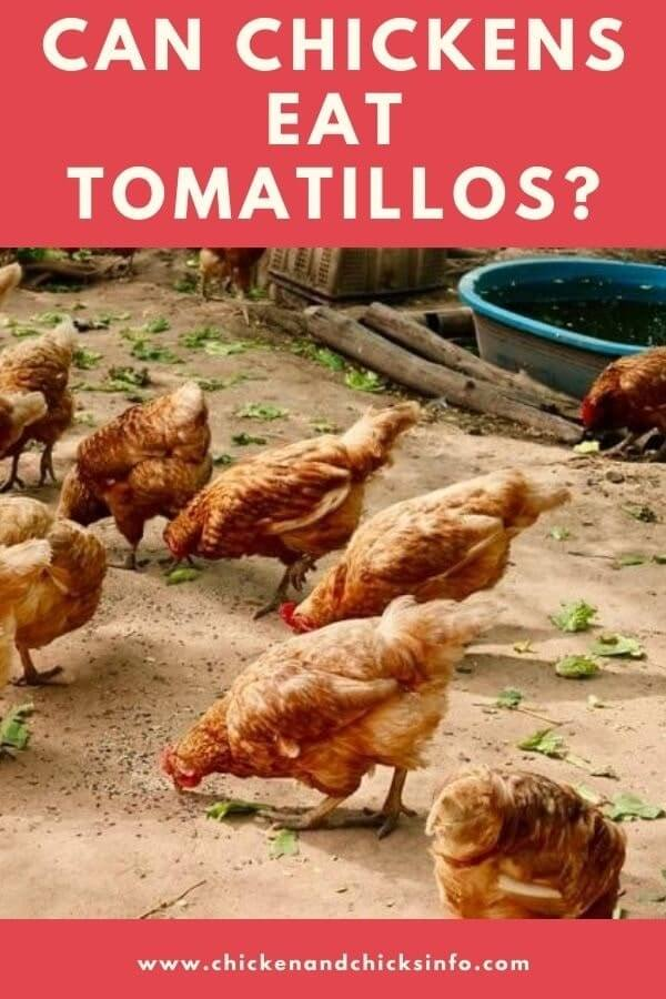 Can Chickens Eat Tomatillos