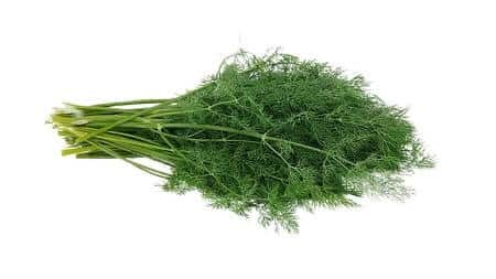 Health Benefits of Dill for Chickens