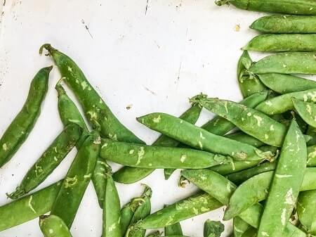 Should You Feed Your Chickens Pea Pods