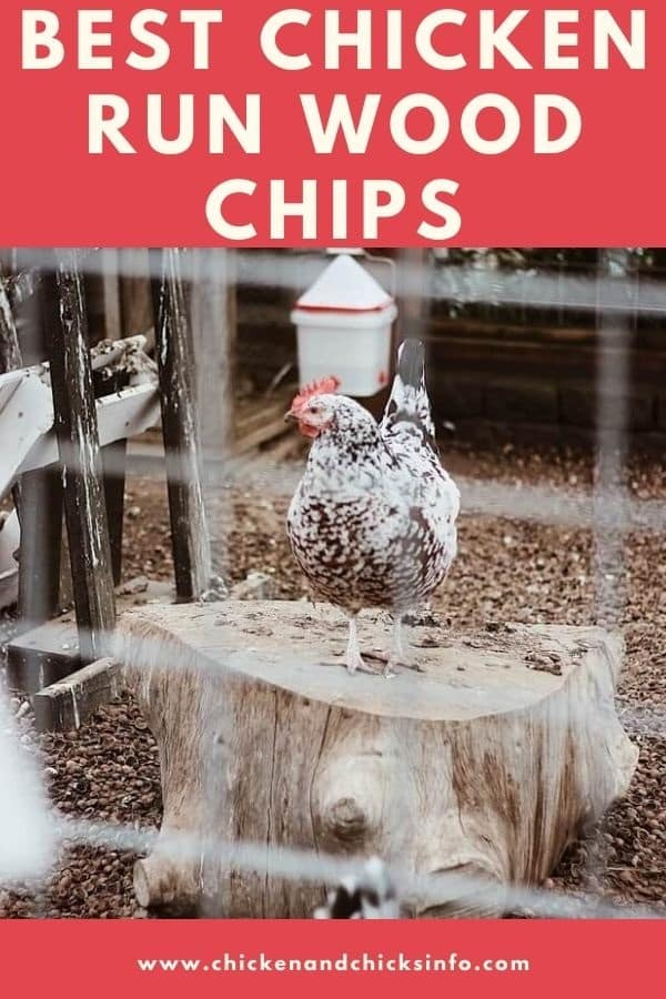 Chicken Run Wood Chips Options