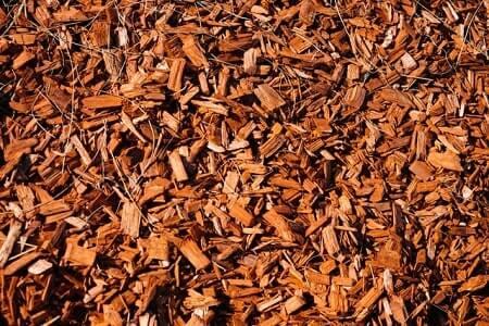 Is Cedar Mulch Safe for Chickens