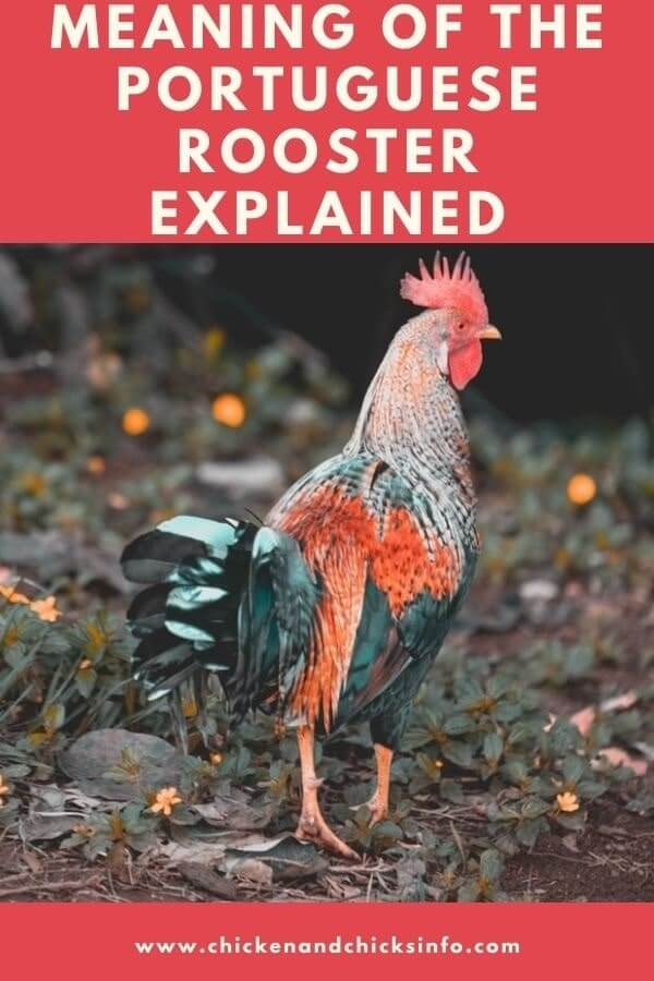 Portuguese Rooster Meaning
