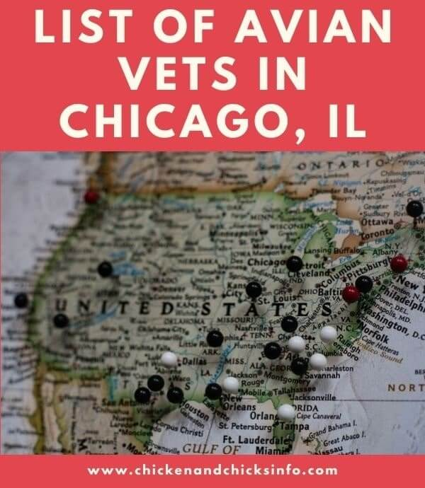 Avian Vet Chicago