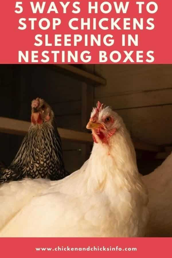 How To Keep Chickens From Sleeping in Nesting Boxes