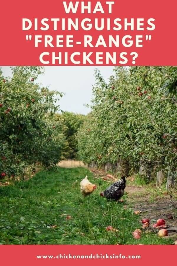 What Distinguishes Free Range Chickens
