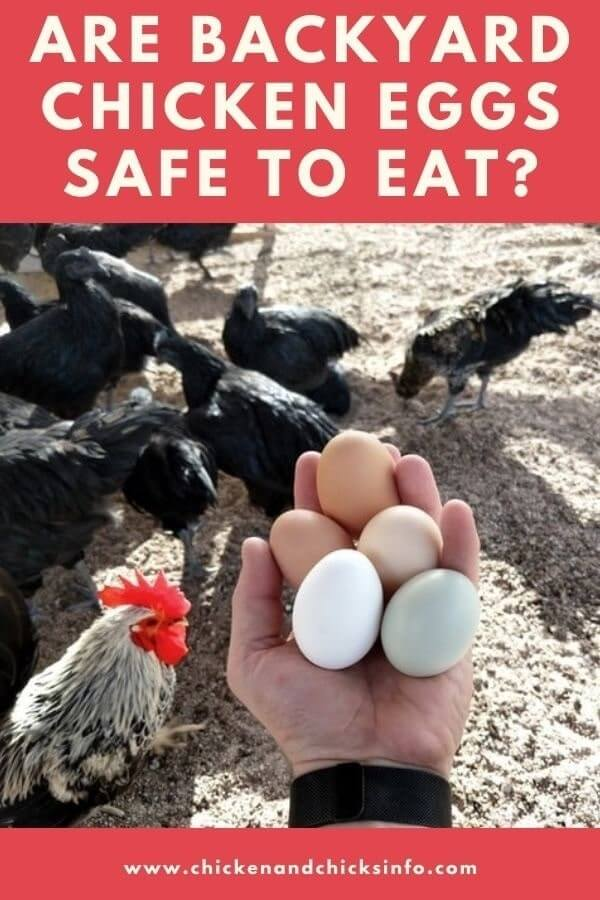 Are Backyard Chicken Eggs Safe To Eat