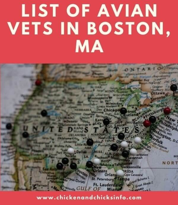 Avian Vet Boston