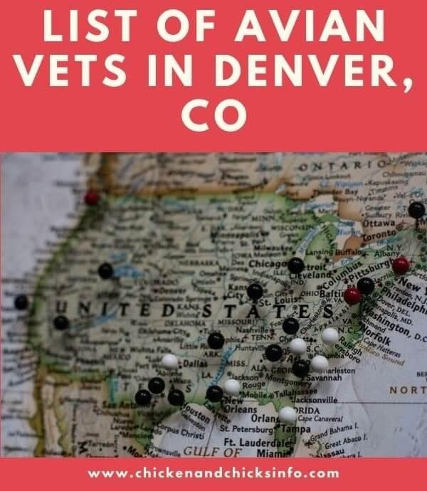 Avian Vet Denver
