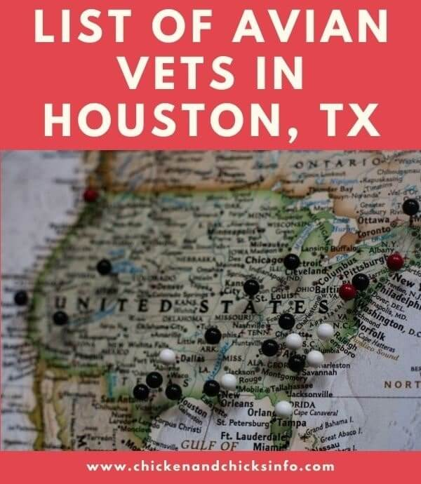 Avian Vet Houston