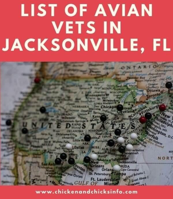 Avian Vet Jacksonville