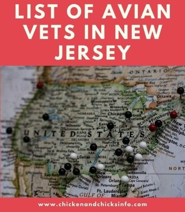 Avian Vet New Jersey