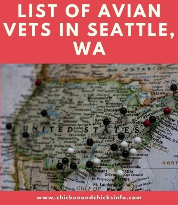 Avian Vet Seattle