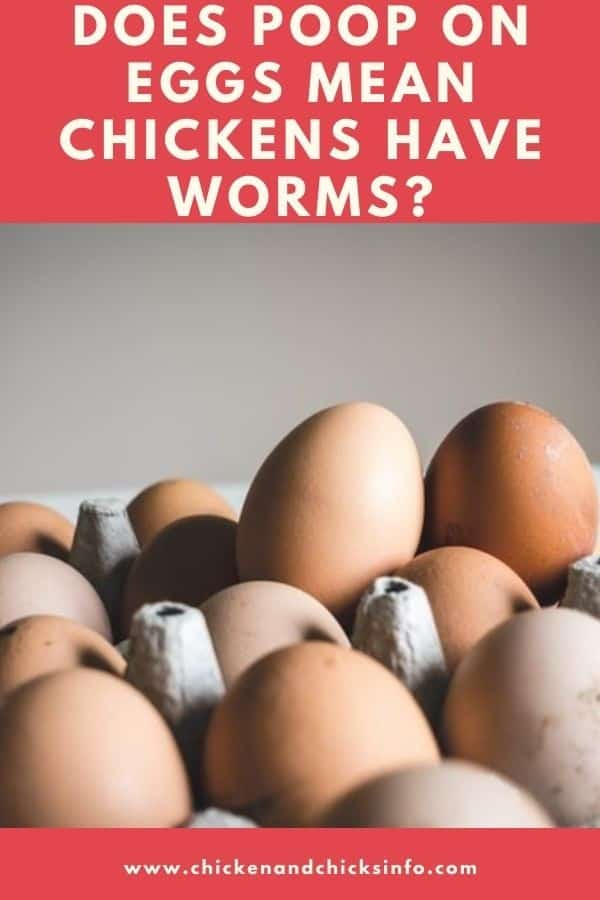 Does Poop on Eggs Mean Chickens Have Worms