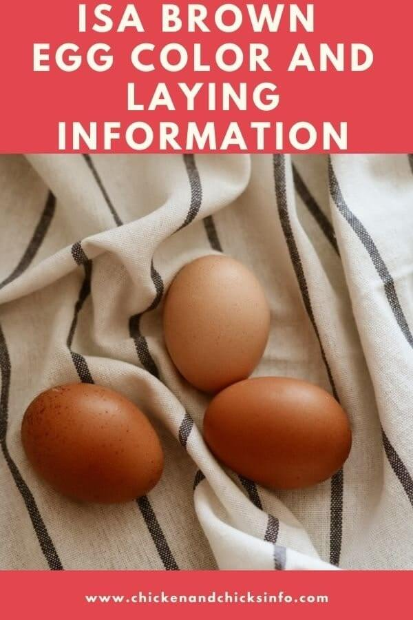 ISA Brown Chicken Egg Color