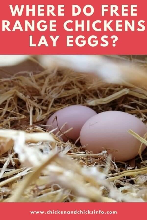 Where Do Free Range Chickens Lay Eggs