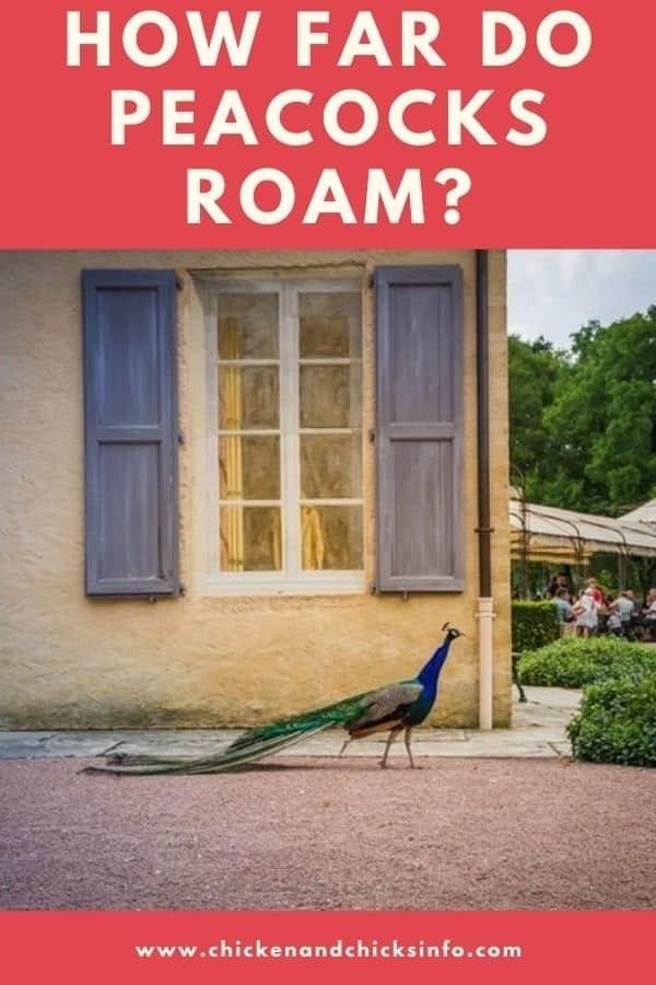 How Far Do Peacocks Roam